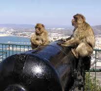 Scimmie_Gibilterra 17-03-16